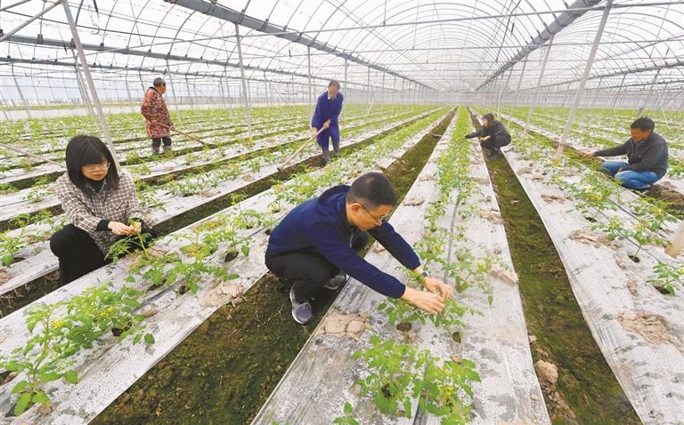 打造高效生态农业 赋能乡村振兴