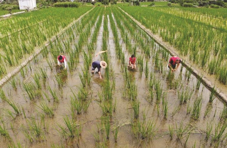 特色农业带动共同富裕